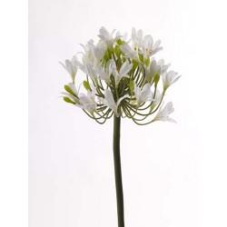 Agapanthus cu 32 flori 92cm